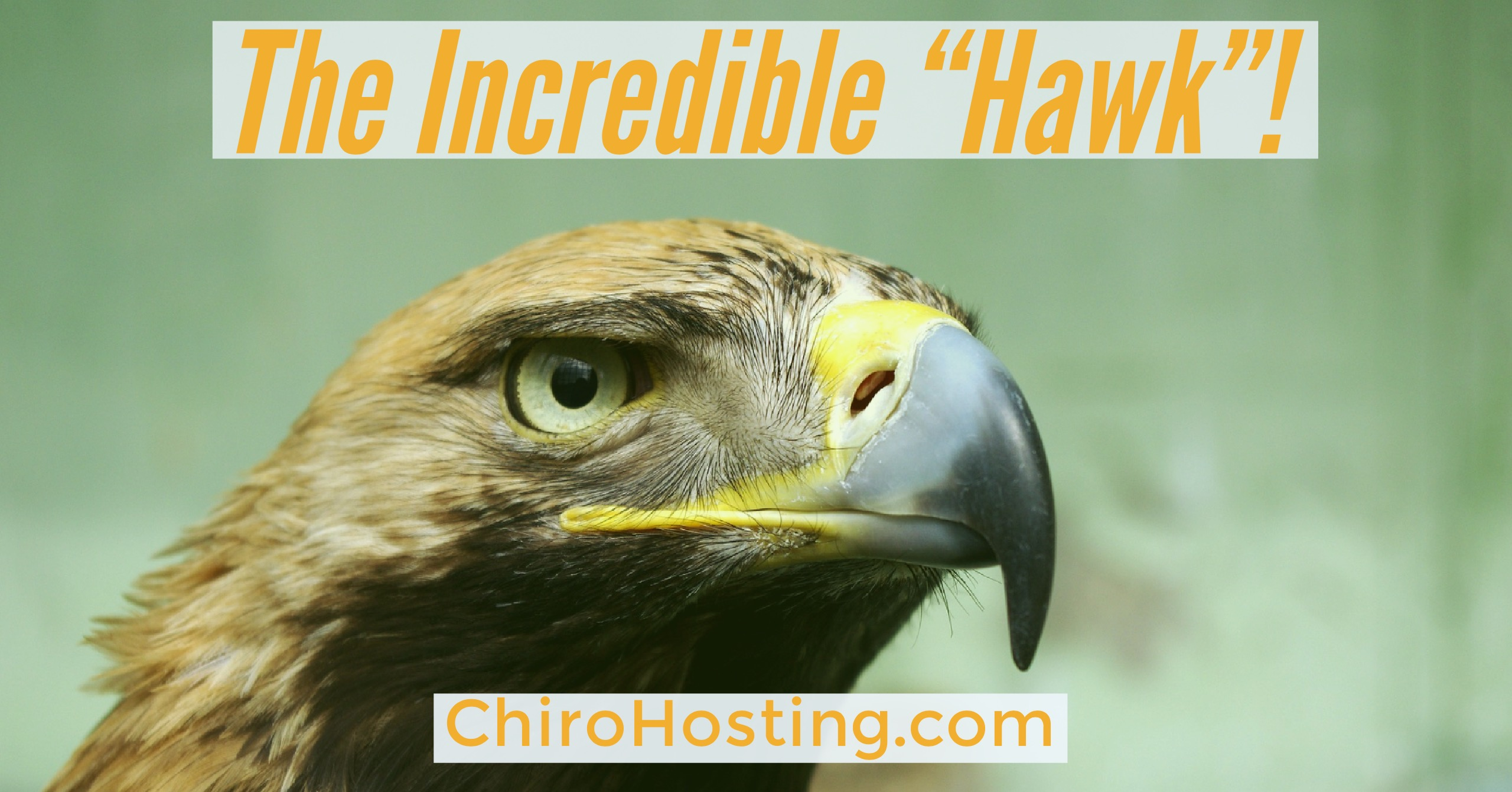 "Google's ""Possum"" Got Eaten by ""Hawk""! Good News for Your Chiropractic Local Search! Finally..."